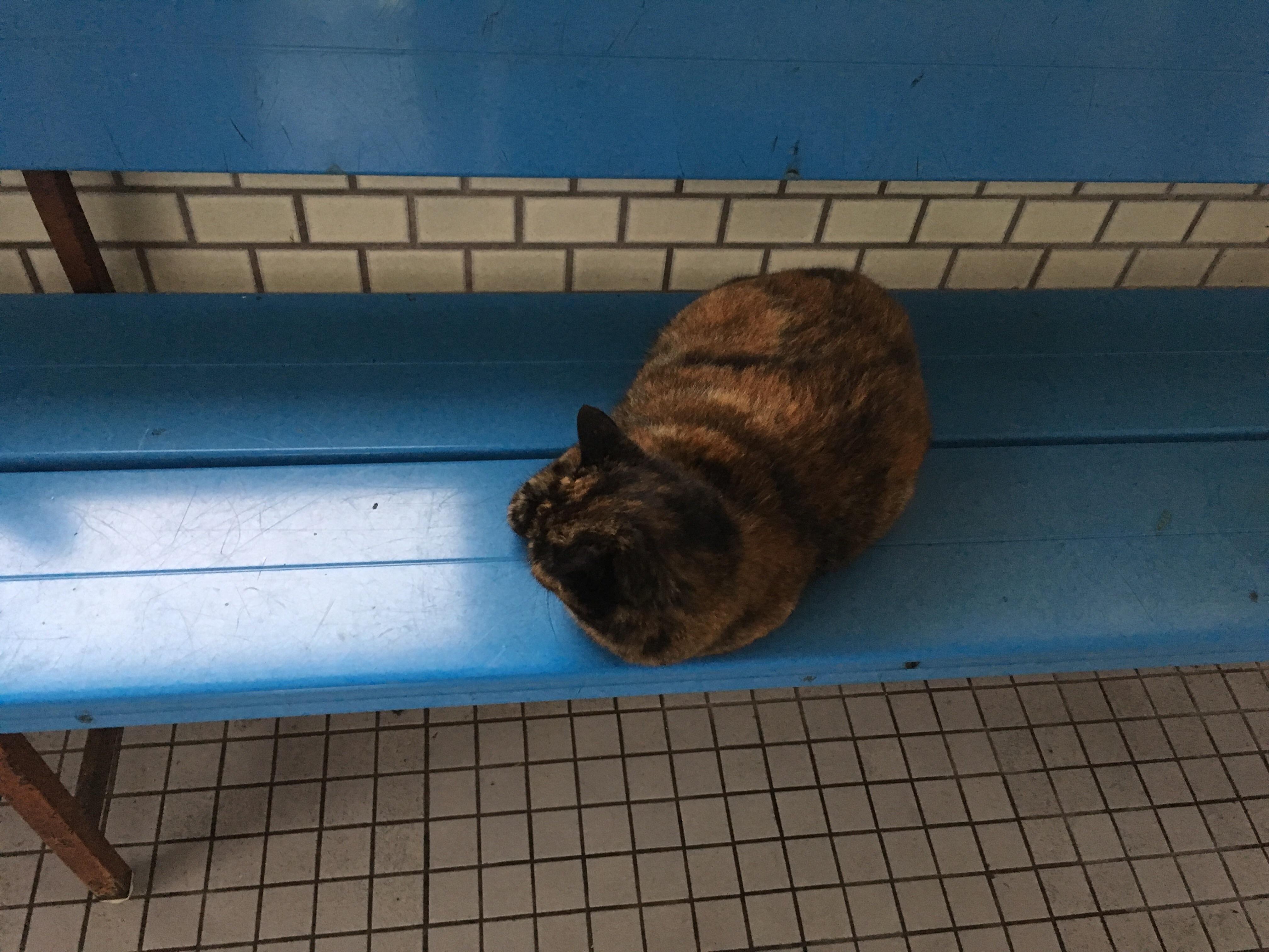 船着き場に居座るネコ。